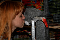 Remi, The Amazing African Grey, Dec. 17, 2009